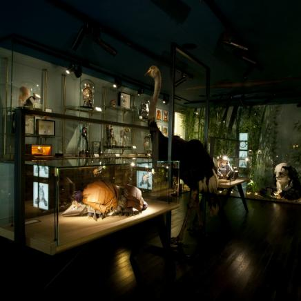 "LV | ""Traveling Curiosities"" Interactive Experience"